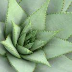 Tips om de juiste planten cadeau te geven
